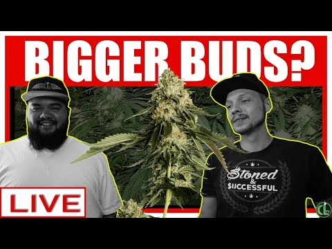 How Do I Grow Bigger Buds? (AND BETTER BUDS!) [replay]