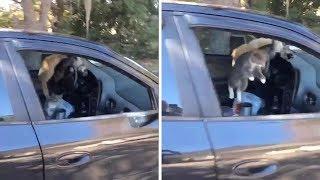 Weź tu człowieku zostaw otwarte okno w samochodzie…