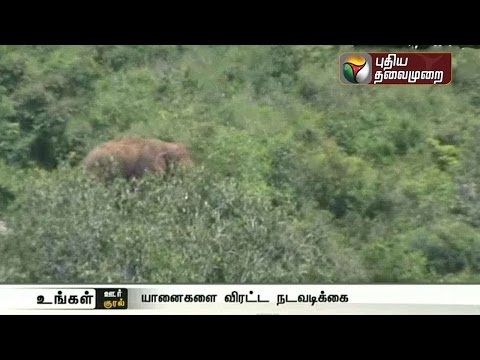 Two-elephants-roam-around-Sanamavu-in-Krishnagiri