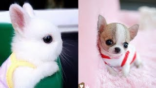 Cutest Animals! Cute baby animals Videos Compilation cute moment of the animals #7