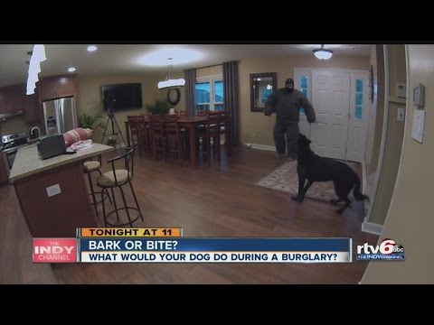 Guard dogs: Do they protect your home?
