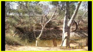 Meekatharra Australia  city images : SOUTH FROM NEWMAN TO KUMARINA MEEKATHARRA WA AUSTRALIA