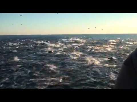 wild dolphins vs. captive dolphins