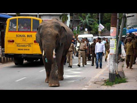 Guwahati: Ein Elefant spaziert durch die Stadt