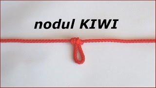 Download Lagu nodul KIWI Mp3