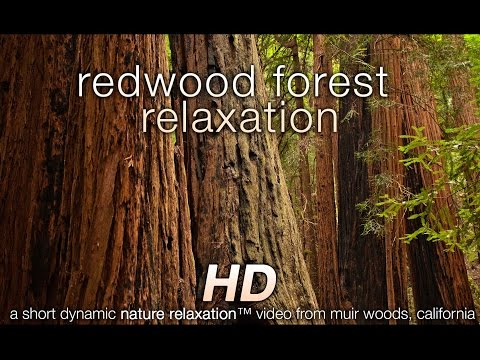 redwood - Relax for a few minutes and enjoy the beautiful sights and peaceful sounds of a redwood forest in this video by David Huting. The locations included are Redw...