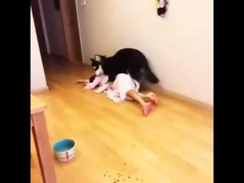 Chú chó có trách nhiệm cứu cô chủ khỏi cái chết