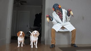 Dogs Attacked by Giant Bug! Funny Dogs Maymo, Penny, & Potpie by Maymo