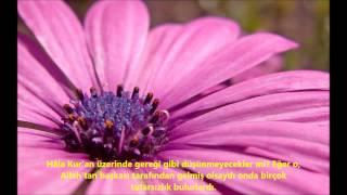 NİSA-(NİSÂ)-SURESİ-Ebubekir Şatiri-Abu Bakr Al Shatri