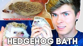 Hedgehog Bath Time! (she's not happy about it) by Tyler Rugge