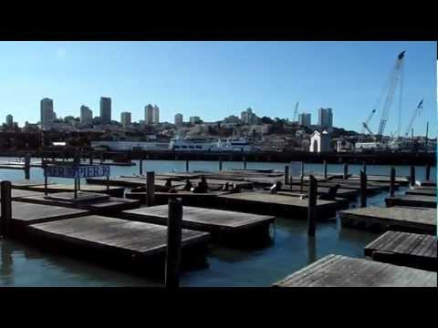 Oroszlánfókák a 39-es mólónál San Francisco-ban (1. videó)