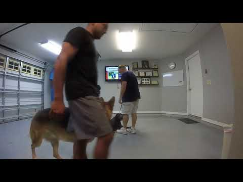 Dog Training New Smyrna Beach Florida