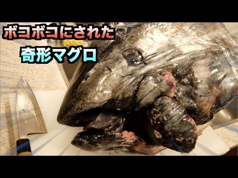市場でボコボコにされた奇形マグロの頭を解体して食べてみた!!