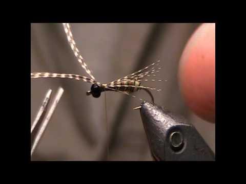 Banksia Bug