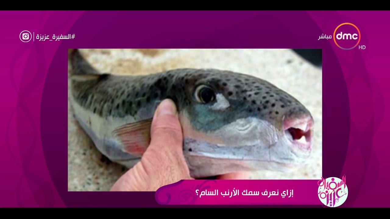السفيرة عزيزة - د.محمد بكير .. يوضح خطورة سمك الأرنب السام