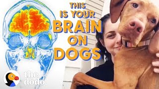 What Happens To Your Brain When You Pet a Dog? | The Dodo by The Dodo
