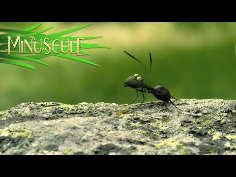 Minuscule Valley of the Lost Ants - The Sugar Box (Excerpt)