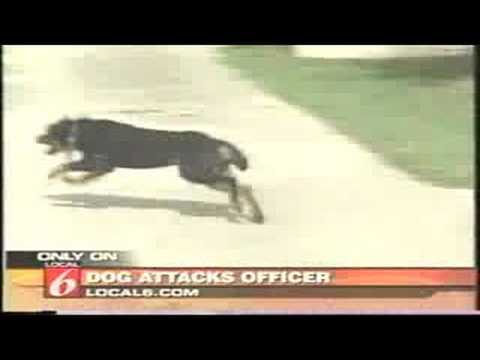 Dog gets Tasered