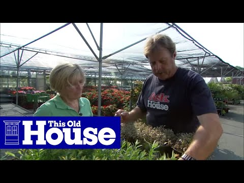 How to Choose and Plant Ground Cover | This Old House