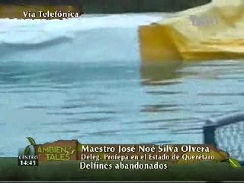 Delfines abandonados en Querétaro, ¿Qué dice la PROFEPA?