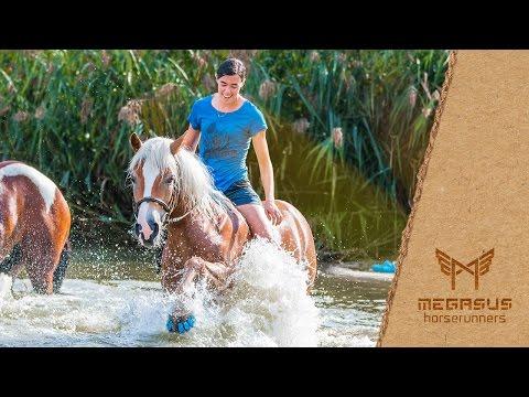 Megasus Horserunners – první tlumící podkovy pro koně!