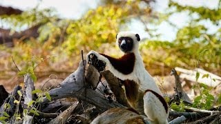 Nonton Island Of Lemurs  Madagascar Film Subtitle Indonesia Streaming Movie Download