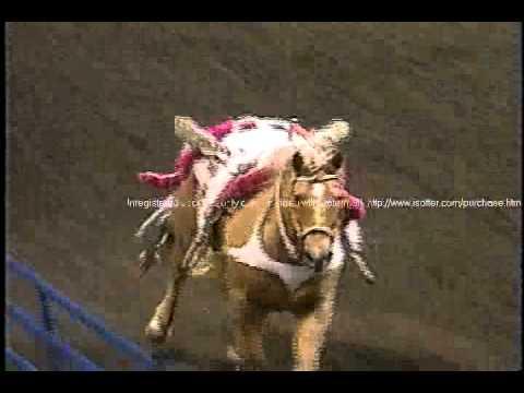 Trick Riding – Longhorn Rodeo taildrag.wmv