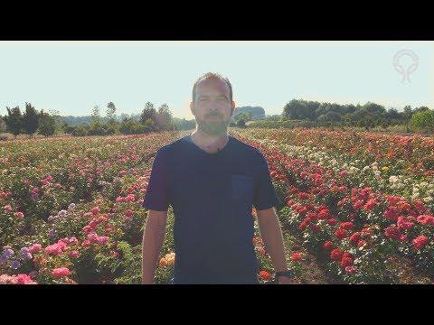 Zahradník Starkl ajeho růže