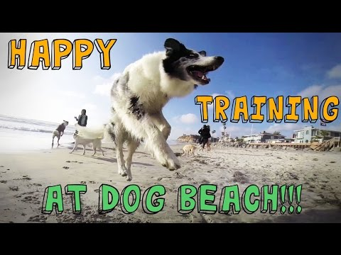 "Dog Tricks and Training at DOG BEACH to Pharrell Williams ""HAPPY"" song"