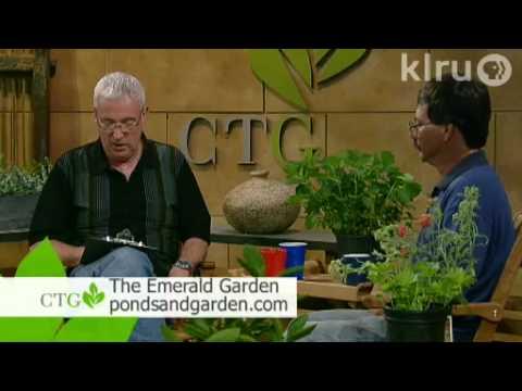 Central Texas Gardener: 5/01/10 (видео)