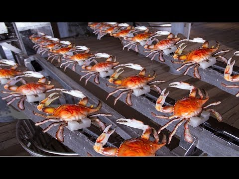 How to Harvesting Crab - Amazing Crab Factory - Crab Meat Processing Line - Thời lượng: 10:07.