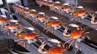 Video How to Harvesting Crab - Amazing Crab Factory - Crab Meat Processing Line MP3, 3GP, MP4, WEBM, AVI, FLV Juli 2019