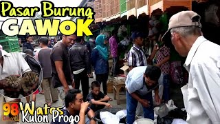 Download Video PASAR BURUNG TERBESAR DI KOTA WATES MP3 3GP MP4