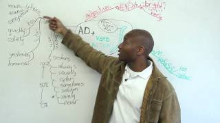 3 ways to use adverbs