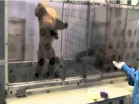 猴子做同樣工作給不同報酬…生氣了!(從1:10開始觀看)