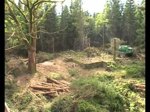 SkogensKulturav.