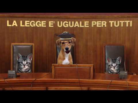 contro l'abbandono degli animali domestici applichiamo la legge!
