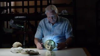 Nonton Attenborough And The Giant Dinosaur Vfx Highlights Film Subtitle Indonesia Streaming Movie Download
