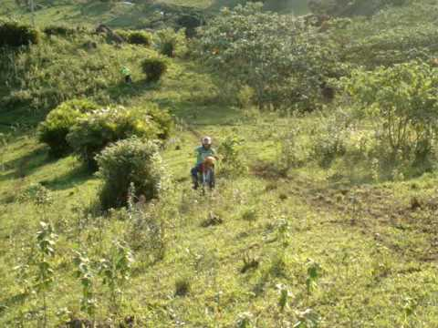 Trilha Reserva do Cabaçal - Faguinho Caindo depois de Empinar