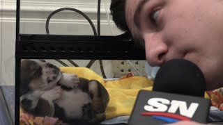 Adorable Dogs Share Their Stanley Cup Picks With Steve Dangle by Sportsnet Canada