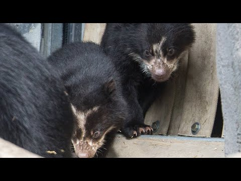 Frankfurt am Main: Zoo Frankfurt - Nachwuchs der Br ...