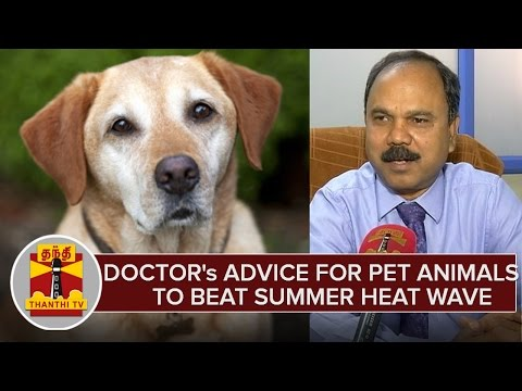 Veterinary-Doctors-Advice-for-Pet-Animals-To-Beat-Summer-Heat-Wave--Thanthi-TV