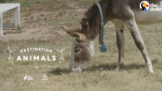 Snuggle With Rescue Donkeys While They Look For Their Forever Homes | The Dodo Airbnb Experiences by The Dodo