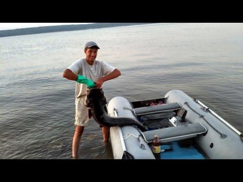 ловля судака на сурском водохранилище видео
