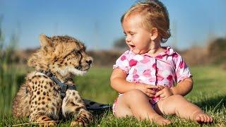 Crianças são melhores amigos de dois guepardos