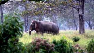 Bardia Nepal  City new picture : Bardia.Nepal.Leader of the Pack elephants 2