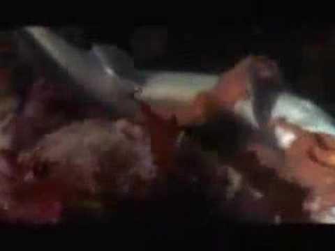 0 Giant Octopus Eats Shark
