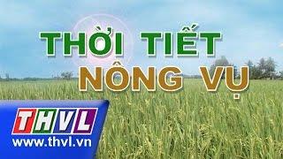THVL | Thời tiết nông vụ (01/7/2015), thvl, truyen hinh vinh long, thvl youtube