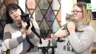 порода кошек у анжелики варум