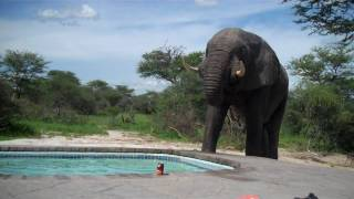 ELEPHANT HUNT HUNTER 2014 YouTube video